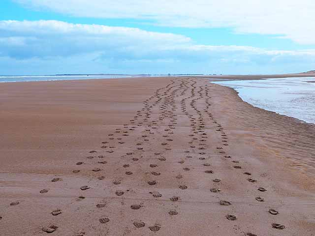 Leave Your Footprints